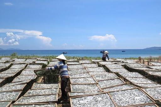 Hướng dẫn cách làm nước mắm cá cơm tại nhà chuẩn vị truyền thống